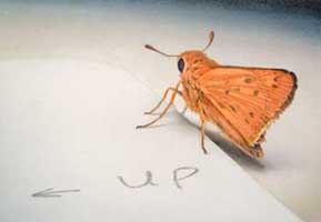 Up, 2008, watercolor