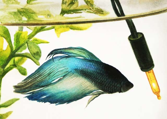 paul pitsker frequently asked questions about watercolor paintings